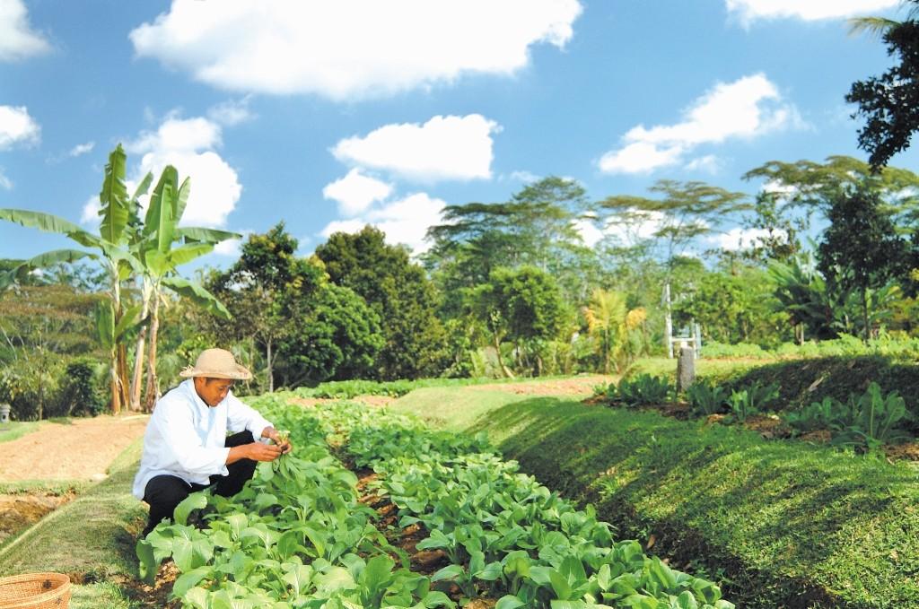 08_2 Organic farm (1024x679)